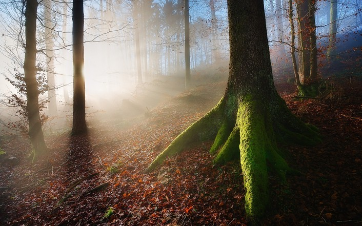 forest-sunrise-267-706