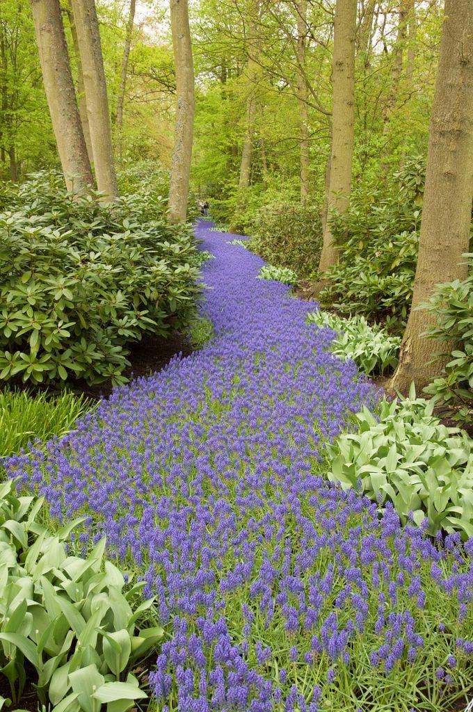 hyacinth-1004239_1280